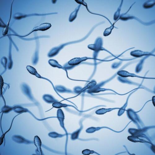 spermodiagramma