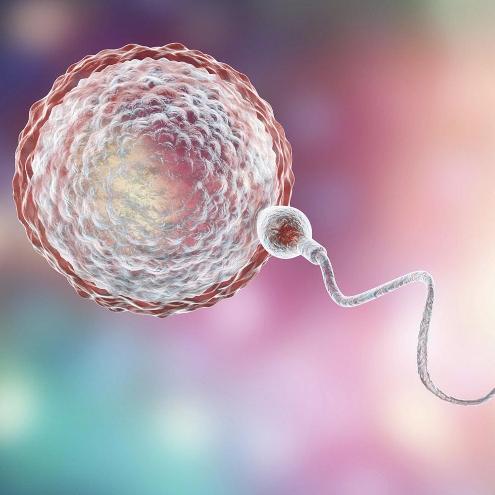 δωρεά σπέρματος iolife
